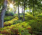美国风景园林师协会奖